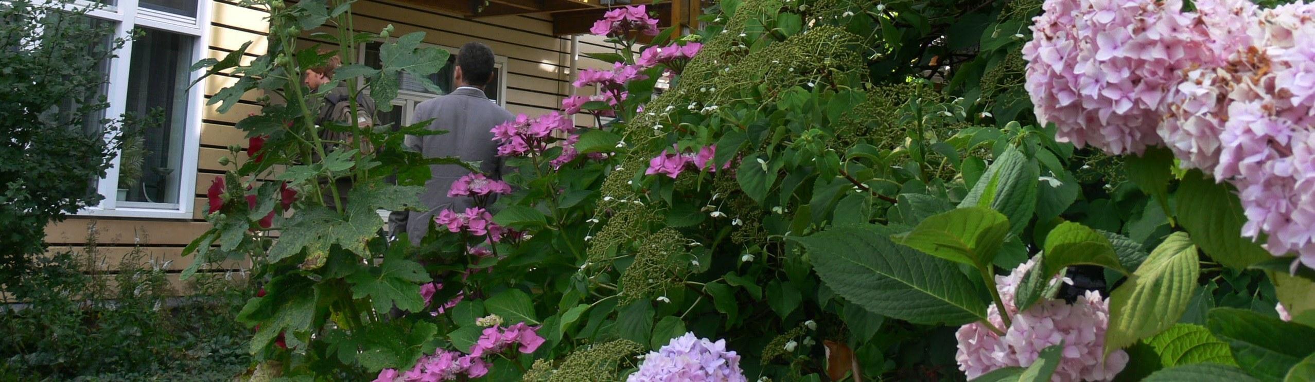 aménagement plantes terrasse